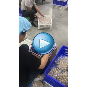 肉丸给袋式zhen空包装机,自动计liang,自动抽zhen空feng口